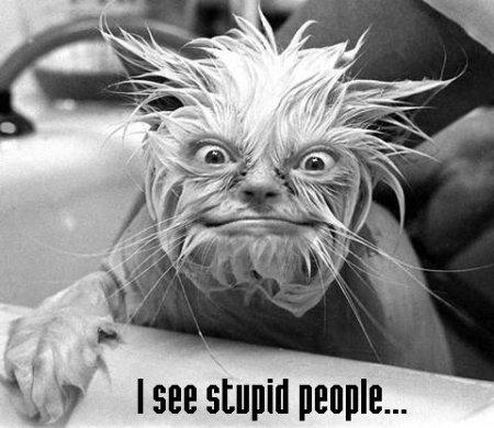 i-see-stupid